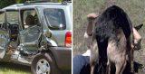 Τράκαρε με το αυτοκίνητό της στην μέση του πουθενά. Τότε, εμφανίστηκε ένας αδέσποτος σκύλος και έκανε το αδιανόητο!
