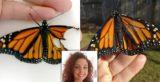 Γυναίκα εγχείρησε και επιδιόρθωσε το σπασμένο φτερό μιας πεταλούδας και της έδωσε μια νέα ευκαιρία στη ζωή