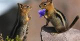 Ζώα… τρελά ερωτευμένα!