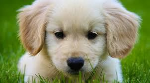 Πέντε πράγματα που πρέπει να σκεφτείς πρίν πάρεις σκύλο