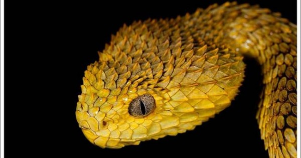 Τα 21 ομορφότερα φίδια στον πλανήτη (εικόνες)