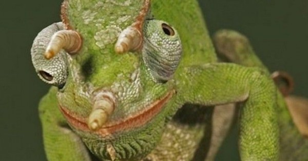 Τα πιο παράξενα ζώα στον πλανήτη (εικόνες)