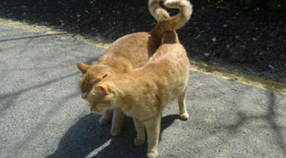 Love is in the air: Οι μήνες… του αισθησιασμού για τις γάτες