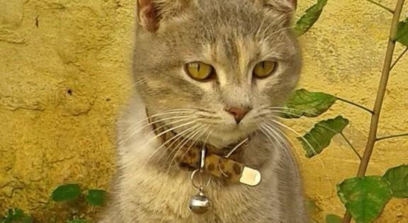 Πανέμορφη γατούλα προς υιοθεσία