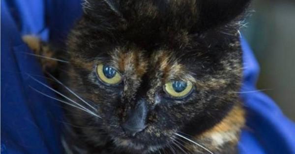 Γνωρίστε την πιο ηλικιωμένη γάτα στον κόσμο!