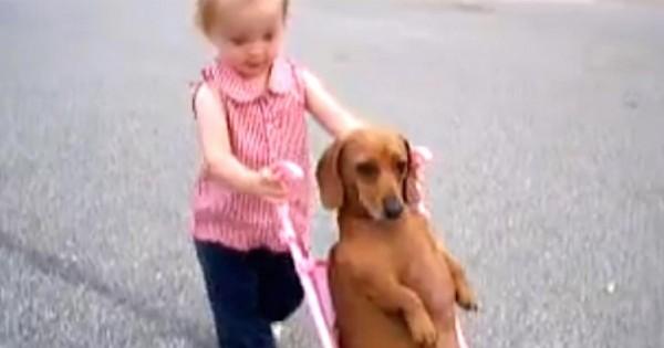 Αξιολάτρευτο μικρό κοριτσάκι έβγαλε το σκύλο βόλτα με το… καροτσάκι της! (βίντεο)