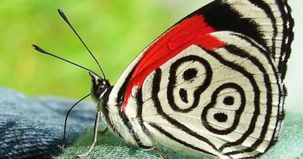 Η τυχερή πεταλούδα με το νούμερο 88 στα φτερά της!