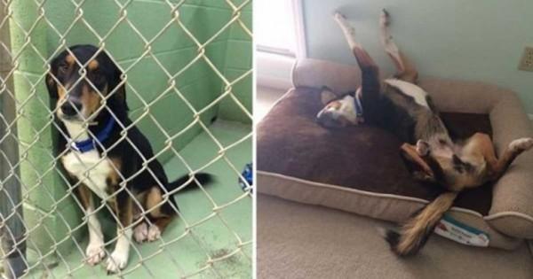 Φωτογραφίες με σκύλους πριν και μετά την υιοθεσία τους που θα σας κάνουν να χαμογελάσετε!
