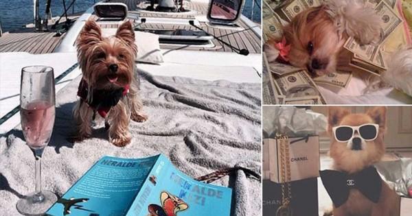 Τα πιο πλούσια και κακομαθημένα σκυλιά των πλούσιων προκαλούν! (εικόνες)