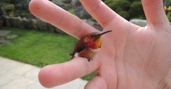 Αυτό είναι το μικρότερο πουλί στον κόσμο και το μέγεθος του δεν ξεπερνά αυτό της μέλισσας!