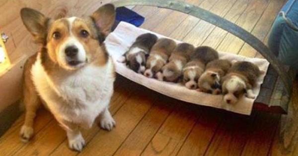 25 περήφανες σκυλίτσες φωτογραφίζονται πλάι στα κουτάβια τους