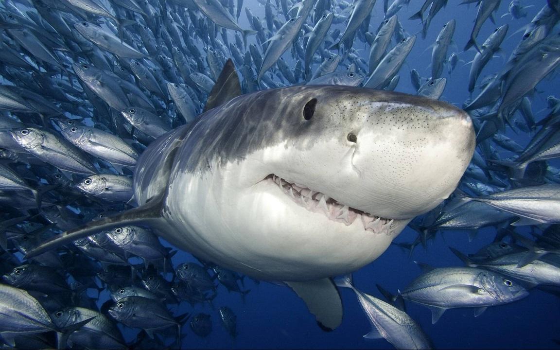 φωτογραφίες στόμα σαγόνια καρχαρίας