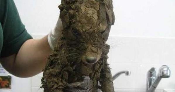 Αυτή η μικρή αλεπού βρέθηκε θαμμένη μέσα σε μια τρύπα