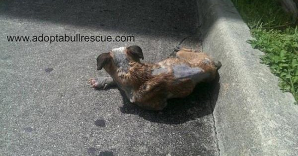 Δεν ήθελαν ένα άρρωστο σκυλί κι έτσι αποφάσισαν να το παρατήσουν στο δρόμο…