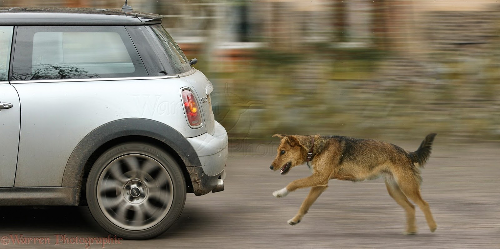 38035-Dog-chasing-a-car