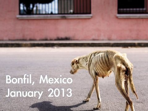 Σκύλος Μεξικό αδέσποτο