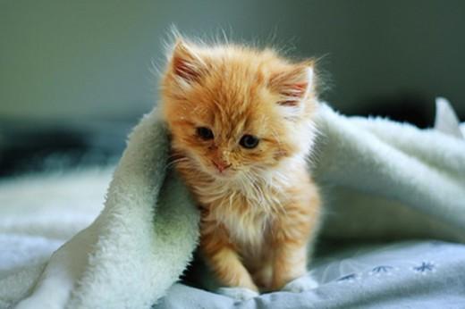 779944_little-ginger-kitty