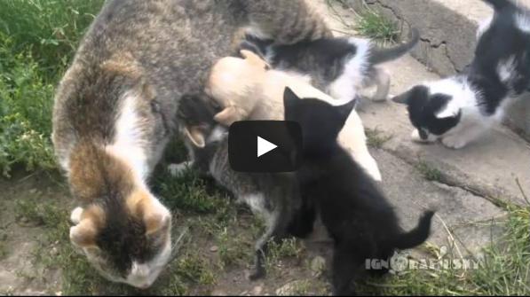 Σκύλος κουτάβι Γάτα