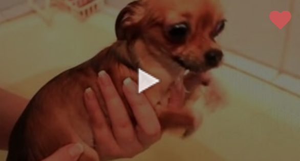 Αυτοί οι σκύλοι πραγματικά σιχαίνονται το μπάνιο!