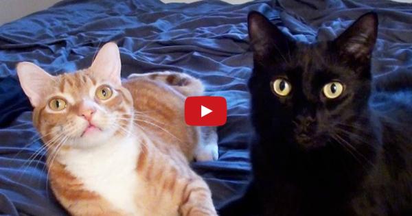 Τρυφερές στιγμές αδερφικής αγάπης ανάμεσα σε δύο γατάκια (video)