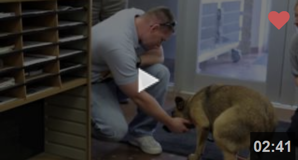Θα σας κάνει να κλάψετε: Σκύλος που είχε χαθεί για 7 μήνες, βρίσκει ξανά την οικογένειά του (video)