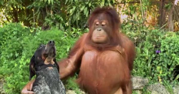 Οι πιο περίεργες φιλίες στο ζωϊκό βασίλειο μέσα από μια εμπνευσμένη διαφήμιση! (vid)