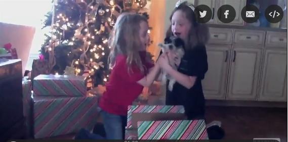 Δείτε σε αυτό το βίντεο γιατί τα κουτάβια είναι το καλύτερο δώρο που μπορείτε να κάνετε!