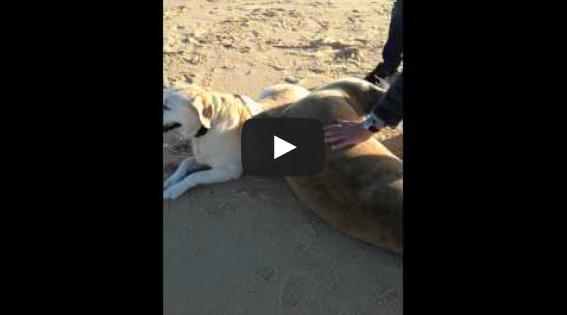Φώκια αγκαλιάζει σκύλο! Το βίντεο θα σας κάνει να λιώσετε!