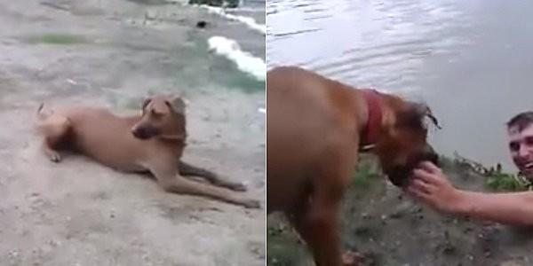 Απίστευτος σκύλος! Νομίζει ότι το αφεντικό του πνίγεται και… δείτε τι κάνει! (vid)