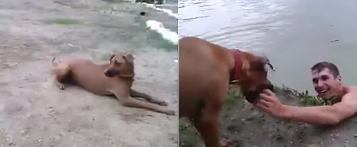 Dog-Thinks-Owner-Drowning