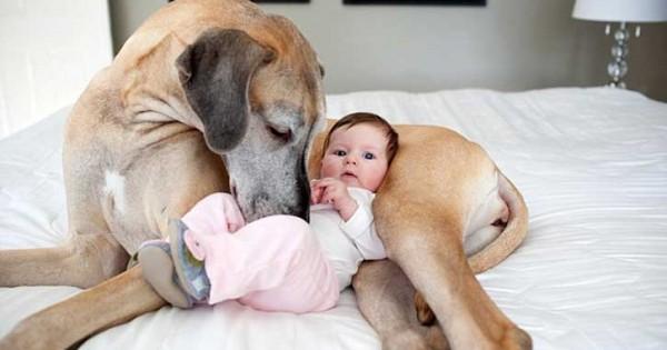 Μωρά παίζουν με… μεγάλα σκυλιά! (video)