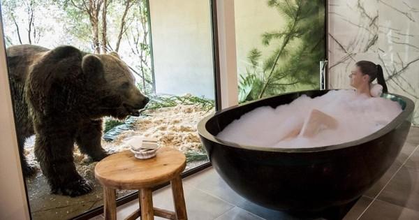 Θα έμενες σε ξενοδοχείο με συγκάτοικους σου άγρια ζώα;