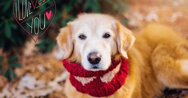 Εσείς τι δώρο θα κάνετε στο σκυλάκι σας για τον Άγιο Βαλεντίνο