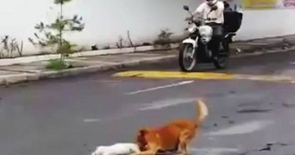 ΣΥΓΚΙΝΗΤΙΚΟ: Ο φίλος του χτυπήθηκε και προσπαθεί να τον σώσει!