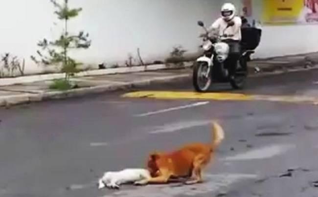 Protective-dog