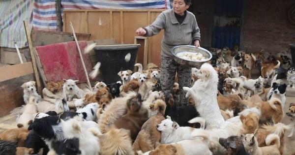 Υπάρχουν άνθρωποι: Κάθε μέρα σηκώνεται στις 4 το πρωί για να ταΐσει 1300 αδέσποτα σκυλιά (εικόνες)