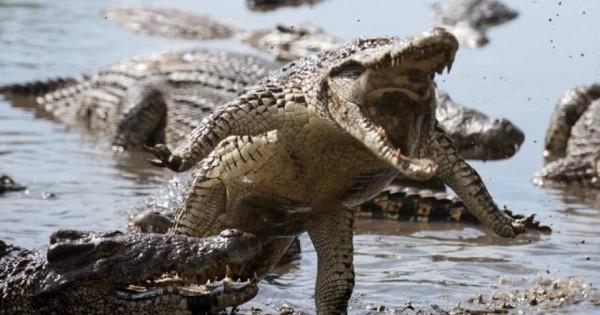 Βίντεο με επικές μάχες άγριων ζώων