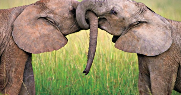 20 ζευγάρια ζώων που αποδεικνύουν ότι υπάρχει αγάπη (εικόνες)