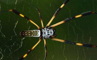 Πρώτες στα μαθηματικά οι αράχνες