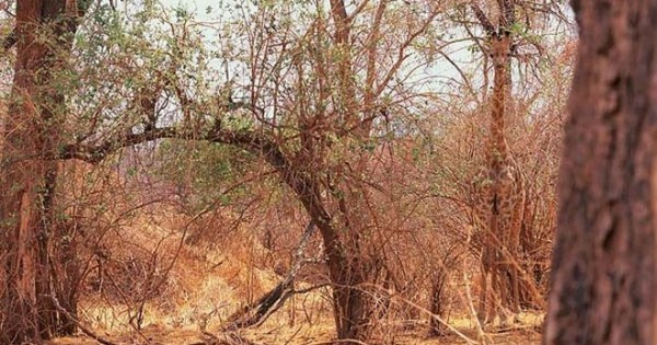Τέλειο καμουφλάζ: Μπορείτε να βρείτε τα κρυμμένα ζώα;