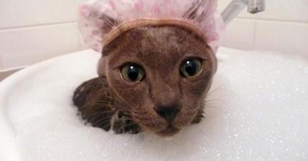 Μερικές… τρελές γάτες που λατρεύουν το νερό!