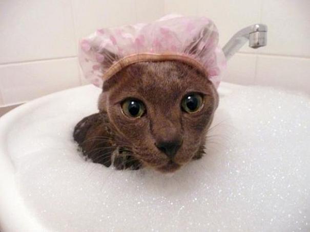 cat-loves-water-bath-6__605