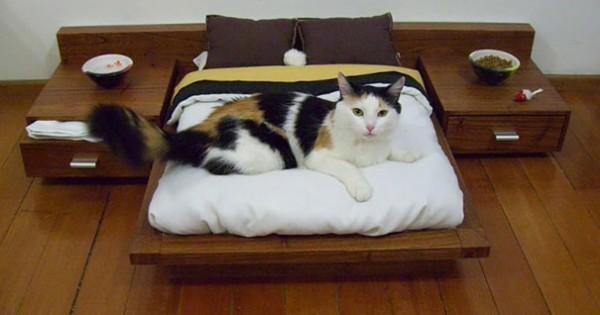 Πραγματικά κακομαθημένες γάτες! (εικόνες)