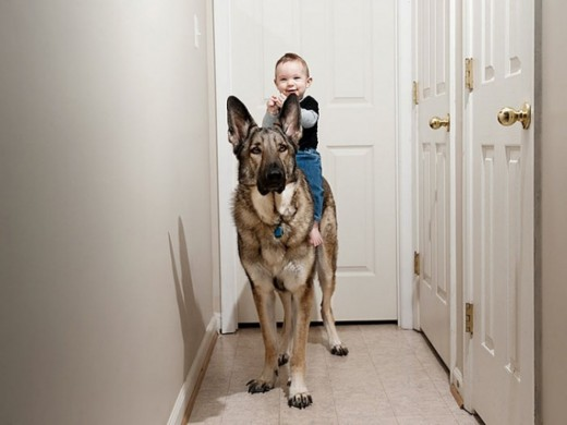 σκύλοι μωράκια