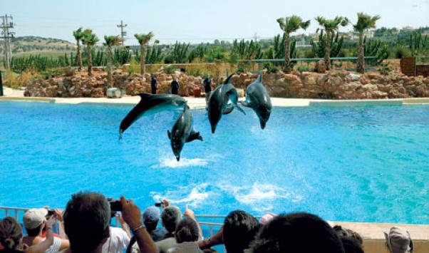 delfinia Attikou
