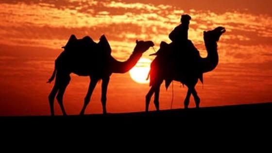 Τεστ: Ποιο ζώο της ερήμου είσαι;