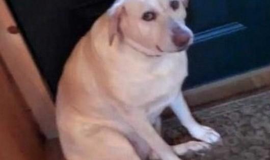 Αυτός είναι ο πιο ένοχος σκύλος στον κόσμο!