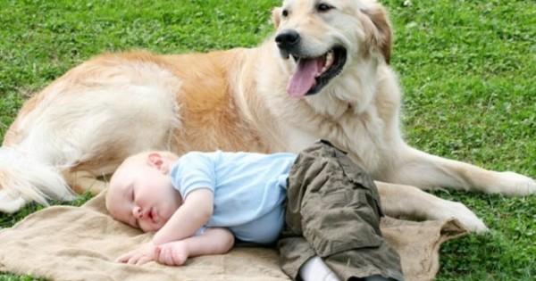 Αρέσει στο μωράκι σας να κοιμάται πάνω στο σκυλάκι σας; Δείτε τι λένε οι επιστήμονες