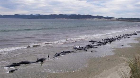 φάλαινες Νέα Ζηλανδία