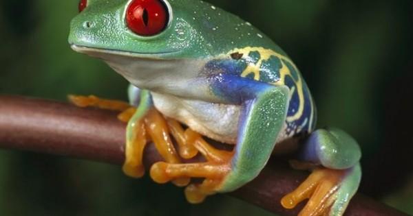 Τα 10 πιο θανατηφόρα ζώα στον πλανήτη